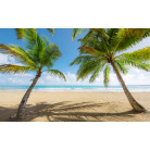 Caribbean Days II