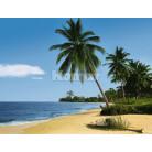 African Beach